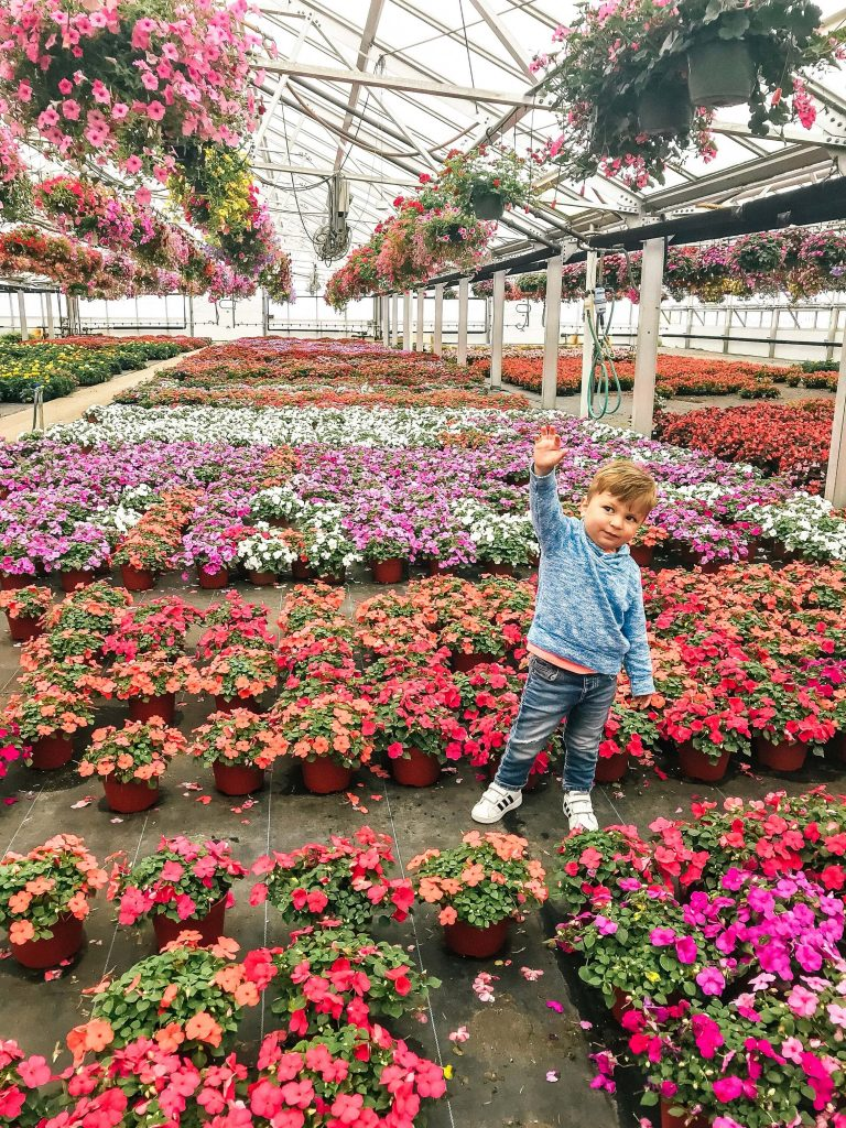Kane's Flower World
